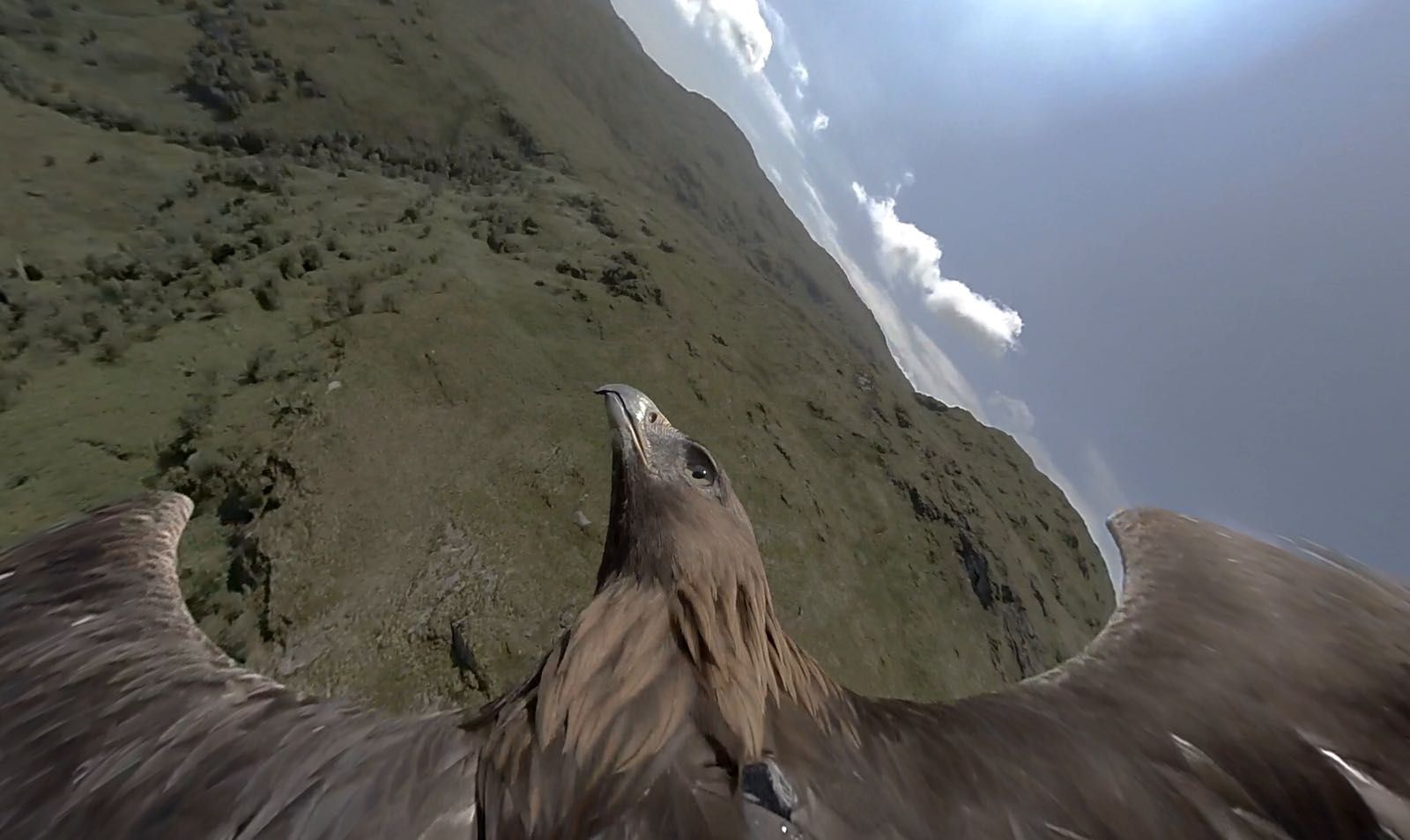 Golden Eagle 360 shoot in Scotland
