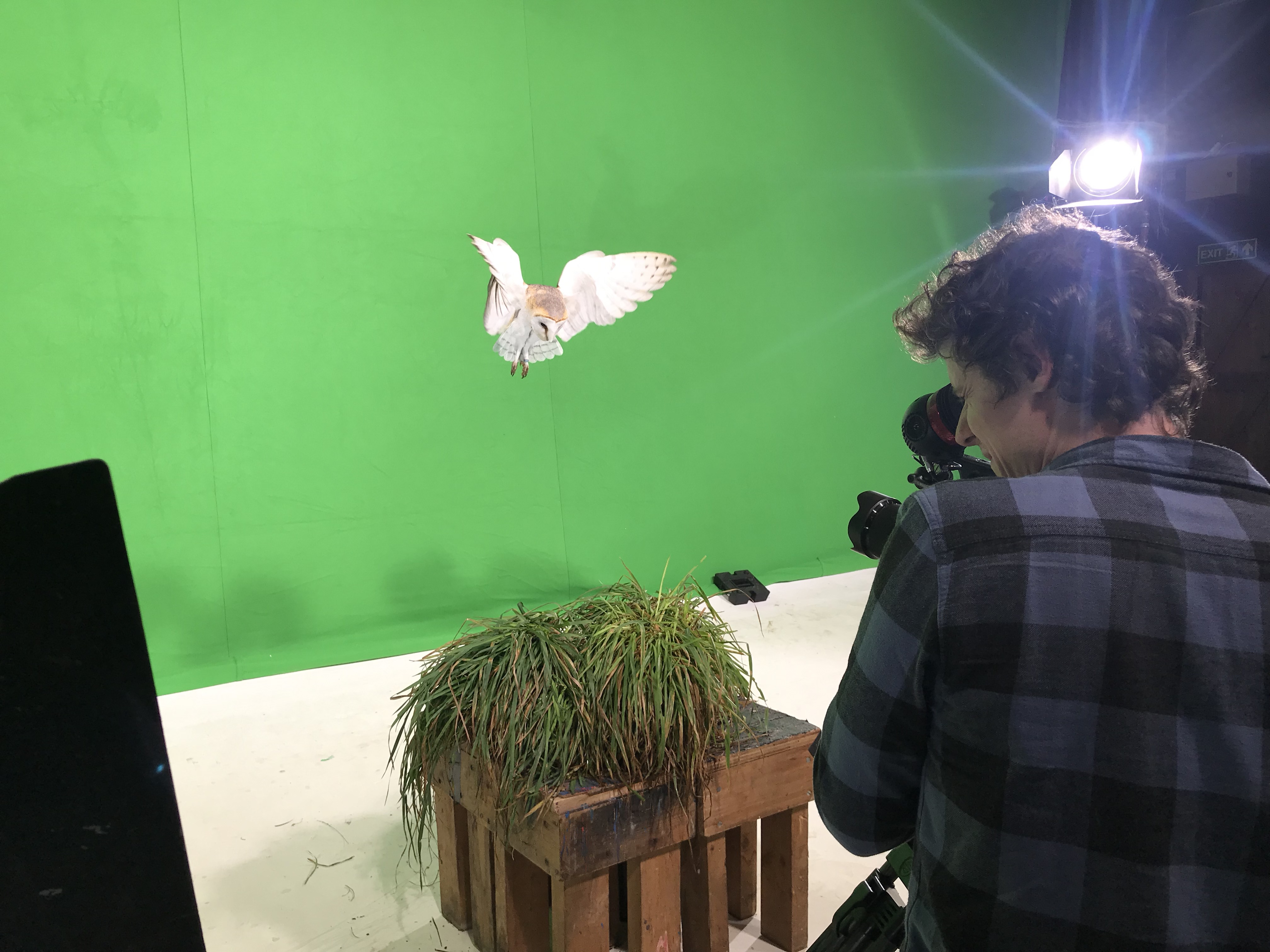 Lily filming