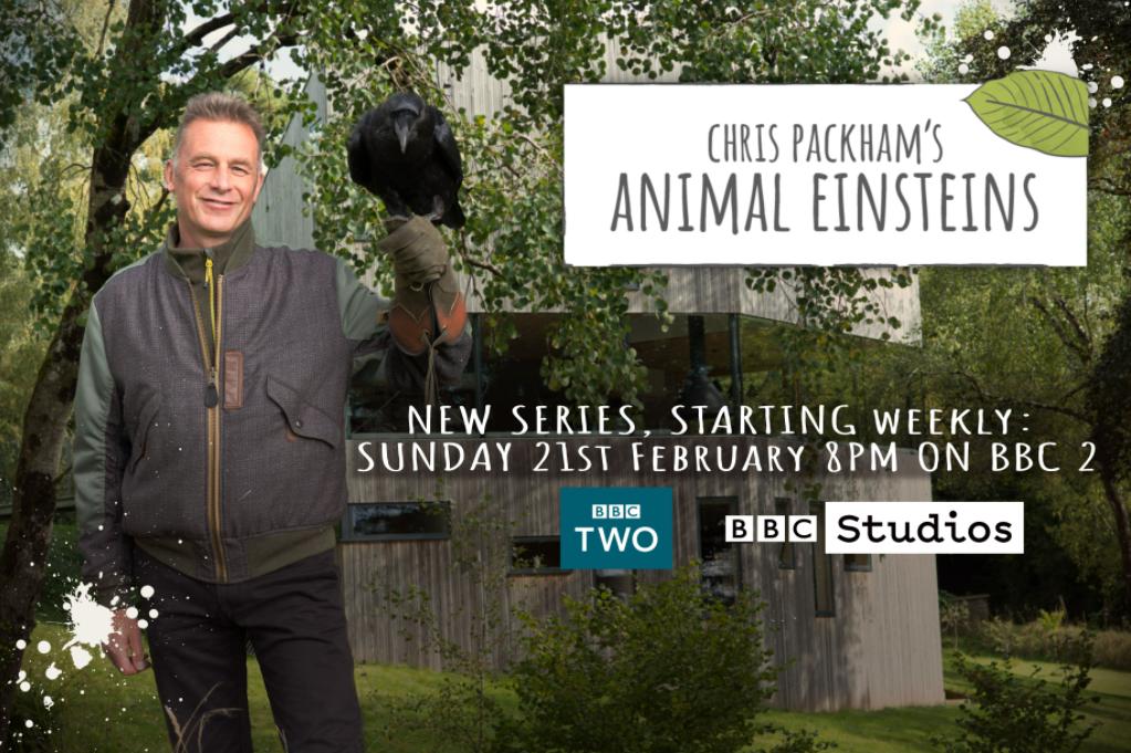 BBC2 – Chris Packhams Animal Einsteins